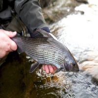 Fishing at Wodencrft 5